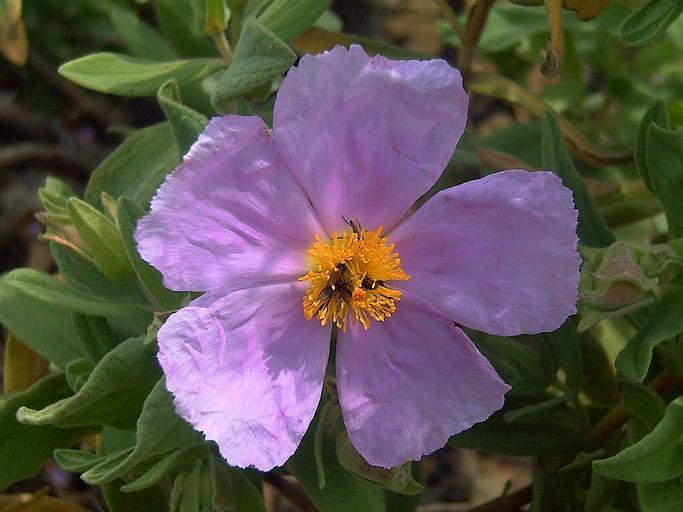 https://snappygoat.com/s/?q=flowerscloseup#eda72d0e7eedc238eed8f7acffc515dba94ce64c,1,342. Source is Wikimedia Commons.