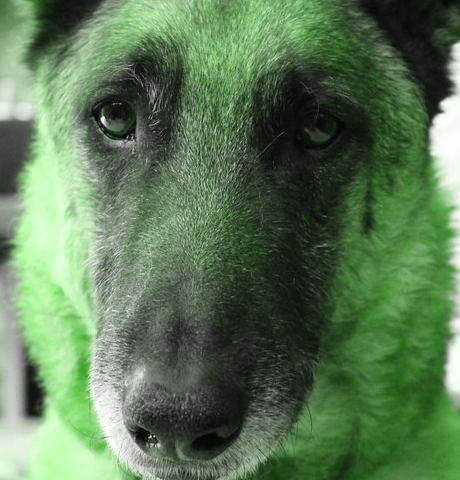 HSV Hue with Dog