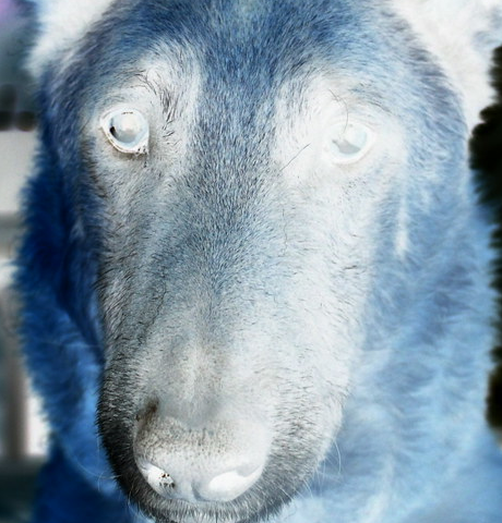 Dog and White images combined using Difference Layer Mode