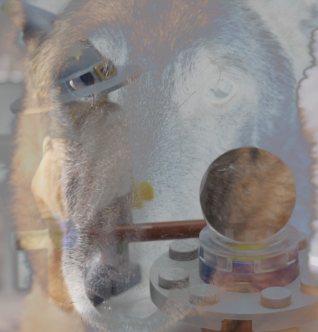Dog and Toy images combined using Exclusion Layer Mode, but Toy image reduced to 50% opacity