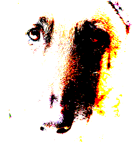Dog image with gradient combined using Hard Mix Layer Mode.