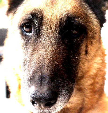 Dog image combined with radial gradient in Linear Light Layer Mode
